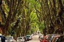 The World's Most Beautiful Street is a Tree-Filled Oasis in the Heart of Porto Alegre, Brazil | Chummaa...therinjuppome! | Scoop.it