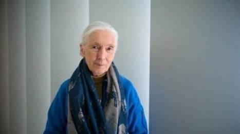 Victoire de Donald Trump - Les défenseurs de la nature doivent redoubler d'efforts, prévient Jane Goodall | décroissance | Scoop.it