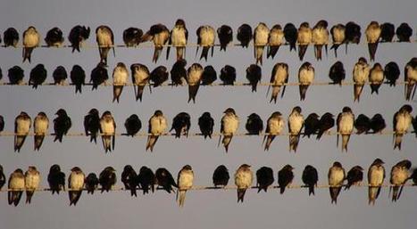 Ah bon, Twitter c'est public? | Slate | Internet, réseaux sociaux et communication numérique | Scoop.it