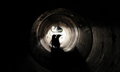 Resultado de imagen para tubo para pinguinos en nueva zelanda