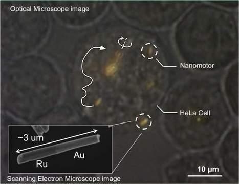 Viagem Fantástica: Nanomotores viajam dentro de células vivas | tecnologia s sustentabilidade | Scoop.it