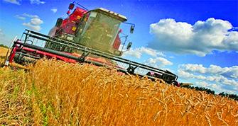 Baisse de la production céréalière : c'est la faute au foncier agricole - Letempsdz.com | Agriculture et Alimentation méditerranéenne durable | Scoop.it