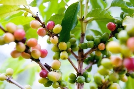 11 Foods Climate Change Could Ruin Forever | green technology | Scoop.it