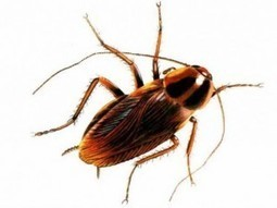 Getting bugs off your homes | PEst control | Scoop.it