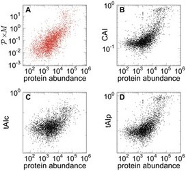 PLOS Computational Biology: Ribosome Traffic on mRNAs Maps to Gene Ontology: Genome-wide Quantification of Translation Initiation Rates and Polysome Size Regulation | Computational_Biology | Scoop.it