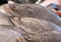 'Sustainable fish' label comes under fire - New York Daily News   Sustainable Sushi   Scoop.it