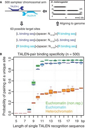 An efficient strategy for TALEN-mediated genome engineering in Drosophila | Multi- gene | Scoop.it