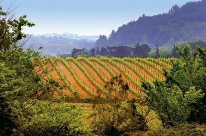 La responsabilité sociale des viticulteurs enjeu d'une nouvelle norme | Le vin quotidien | Scoop.it