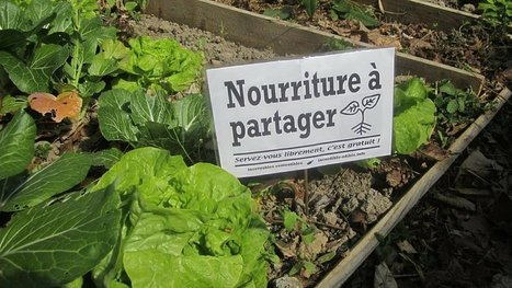 De la nourriture gratuite à chaque coin de rue : le phénomène génial qui contamine la France ! | Les coups de coeur de D'Dline 2020 | Scoop.it
