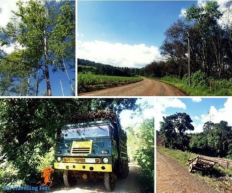 A Day Trip (mis)Adventure to Bukidnon   Philippine Travel   Scoop.it