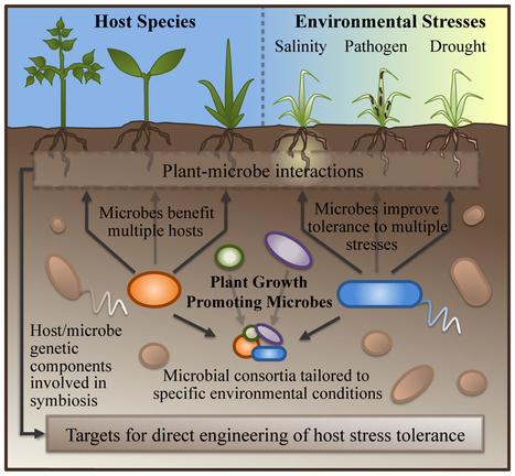 Frontiers | Building the crops of tomorrow: advantages of symbiont-based approaches to improving abiotic stress tolerance | Microbial Symbioses | Redox signalling and Plant Symbioses | Scoop.it