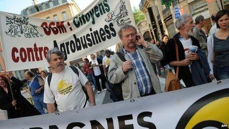 EU changes rules on GM crop-growing | Peer2Politics | Scoop.it