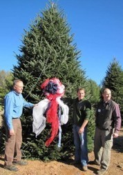 White House Christmas tree is from Ashe County | CALS News Center | News from the College of Agriculture and Life Sciences, NCSU | Research from the NC Agricultural Research Service | Scoop.it