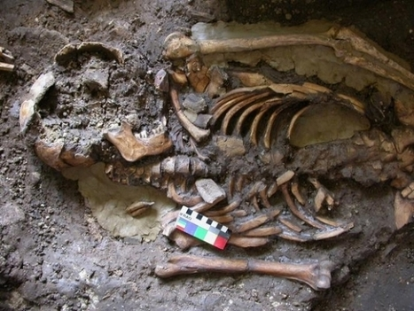 'Fourth Strand' of Previously Unknown Ancient European Human Ancestry Discovered   Virology News   Scoop.it