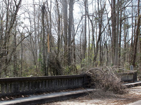 Ice storm costs South Carolina $360 million in timber | Timberland Investment | Scoop.it