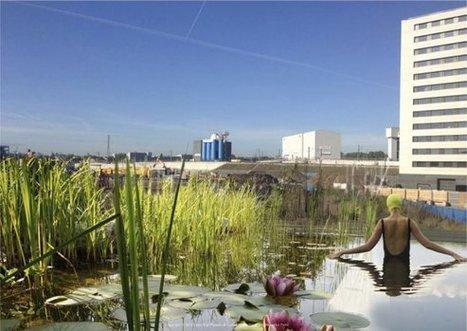 Londres ouvre une piscine publique sans traitements chimiques   Vers une économie positive   Scoop.it