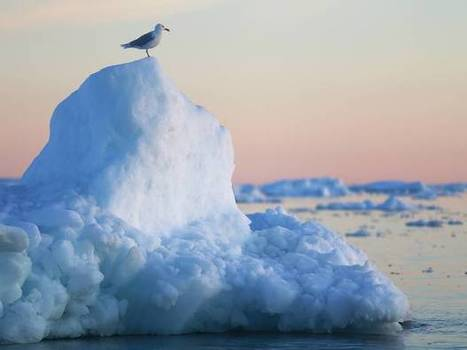 Could another grim record be set in the Arctic?   Leading for Nature   Scoop.it
