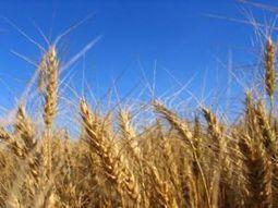 Le Maroc et la FAO en synergie pour un meilleur rendement agricole, à l'approche de la COP 22 | CIHEAM Press Review | Scoop.it