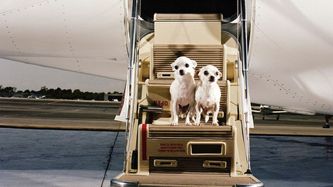 How Puppies Are Propping Up the Private-Jet Market | Radio Show Contents | Scoop.it