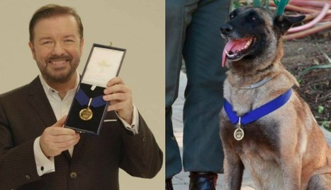 Ricky Gervais Honors Dog Who Nabbed 115 Rhino Poachers | Nature Animals humankind | Scoop.it