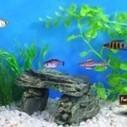 Infographic: World's Best Aquariums | Aquaculture | Scoop.it