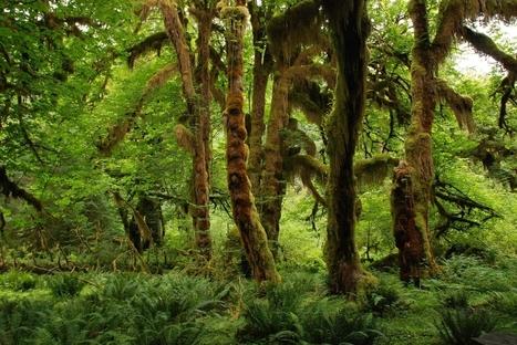 Los árboles también se van a dormir | Actualidad forestal cerca de ti | Scoop.it