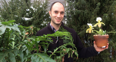 Plants survive much better through mass extinctions than animals | Amazing Science | Scoop.it