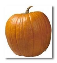 Your Guide to Growing Pumpkins | School Gardening Resources | Scoop.it