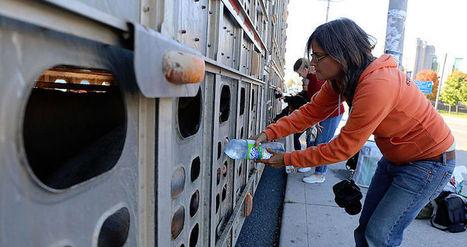 Une activiste canadienne poursuivie pour avoir donné de l'eau à des cochons | 694028 | Scoop.it