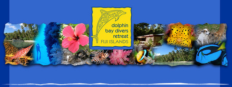 About us - Vanua Levu, Diving Resort in Fiji, Dolphin Bay Divers Retreat, Dolphin Bay Divers, Dive, Diving, Fidschi, Fiji, Taveuni, Rainbow Reef, accomodation, budget, DolphinBay Divers, Fiji, Divi... | Eco Friendly Vacations | Scoop.it