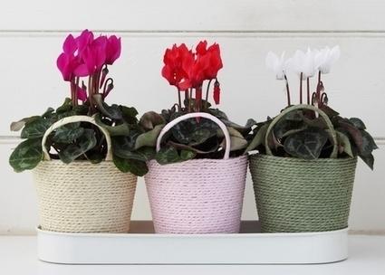 Adorning your Backyard Garden with Online Wholesale Nurseries | Plants Online | Scoop.it