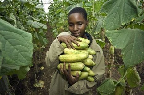 Make farming a rewarding career for Africa's youth | African Agriculture Food and Nutrition Security | Scoop.it