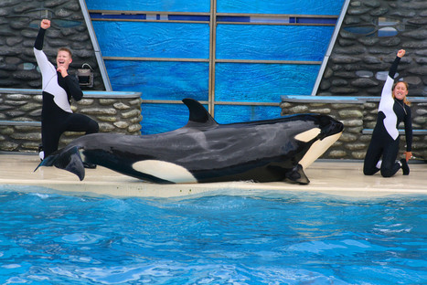 #SeaWorld Signs Up for Public Debate – Yes, You Read That Right.   #OrcaAvengers   Scoop.it