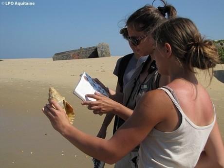 LPO Aquitaine : des sorties natures au Cap Ferret pendant l'été | Tourisme et Communication | Scoop.it
