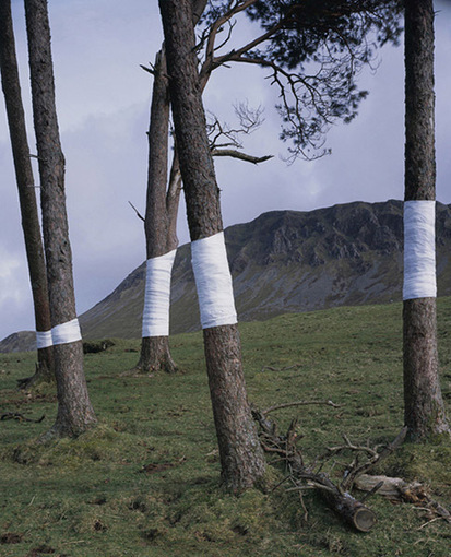 Tree, Line - Zander Olsen, interventions in the landscape | Junctions of Contemporary Art & Education | Scoop.it