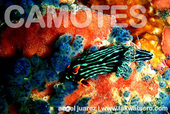 Diving in Camotes Islands | Scuba Diving Adventures | Scoop.it
