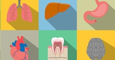 La transplantation d'organes imprimés en 3D se rapproche ! | Ressources pour la Technologie au College | Scoop.it