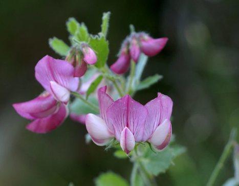 L'Aude classé richesse de flore patrimoniale   Castelnaudary Tourisme - infos   Scoop.it