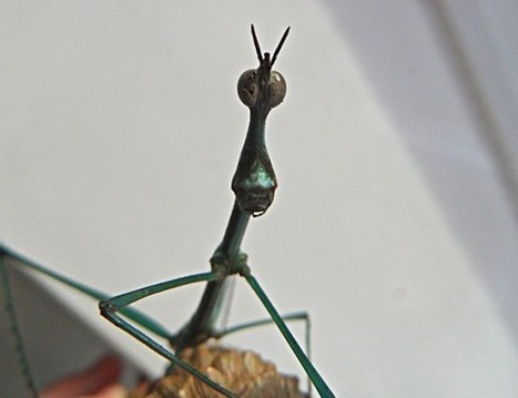 BBSRC mention: Insect limbs & robot implications | BIOSCIENCE NEWS | Scoop.it