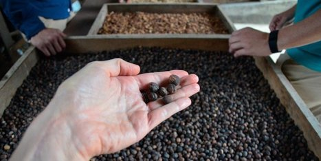 I went to the source of the world's best coffee — and saw firsthand why the industry is in trouble | Coffee News | Scoop.it