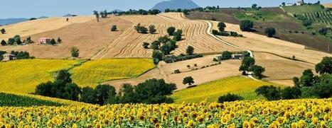 Discover Le Marche with Trips to Italy | Le Marche another Italy | Scoop.it
