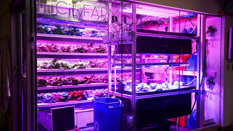 This Desktop Farm Is Like A 3-D Printer For Fresh, Natural Food | Vertical Farm - Food Factory | Scoop.it