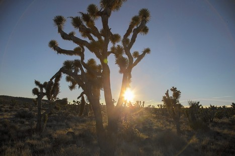 Obama creates 3 new national monuments to protect 1.8 million acres of California desert | enjoy yourself | Scoop.it