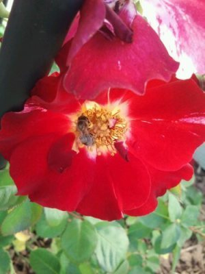 Bees & Blooms   MicrobloggingMonday   Annie Haven   Haven Brand   Scoop.it