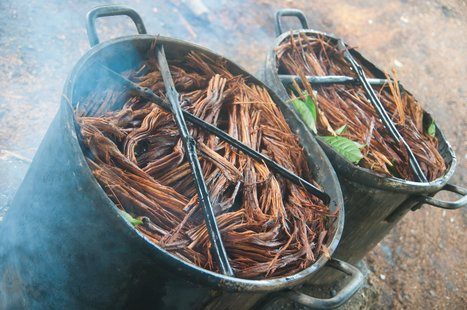 Chemical Found In Ayahuasca May Be Able To Completely Reverse Diabetes   PreDiabetes News   Scoop.it