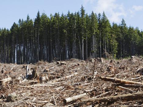 Google Earth Engine Brings Big Data to Environmental Activism - IEEE Spectrum   Remote Sensing   Scoop.it
