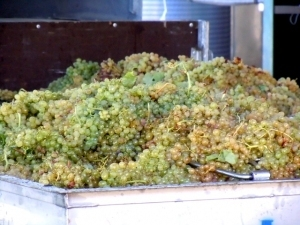 White PortWinemaking | Wine business | Scoop.it