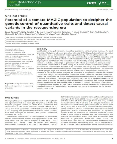 Potential of a tomato MAGIC population to decipher the genetic control of quantitative traits and detect causal variants in the resequencing era | Plant multi-parent advanced generation intercross (MAGIC) populations | Scoop.it