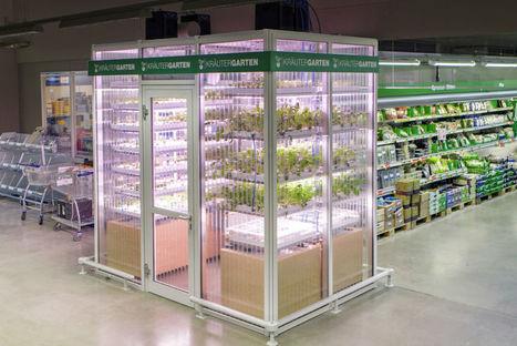 En Allemagne, Metro Cash & Carry cultive ses légumes en magasin [Vidéo] | Allemagne | Scoop.it