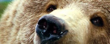 Viaggiare in Canada, alla scoperta dei Grizzly   Viaggi The Wilderness Society   Scoop.it